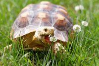 Spirit of the Tortoise - Geist der Schildkröte