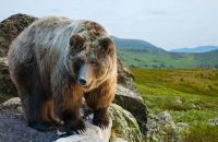 Bear Animal Meditation Empowerment - Bär Tiermeditation