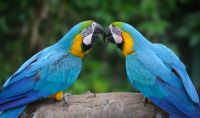 Macaw Animal Meditation Empowerment - Ara