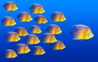 Leadership Power Essence - Führungskraft Essenz
