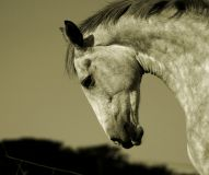 Horse Animal Meditation Empowerment - Pferd