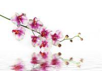 Orchidee Ermächtigung