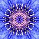 Angel Iahhel Vibrational Essence -Wissen/Intuition/Führungskraft