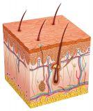 Healthy Skin Reiki (Gesunde Haut Reiki)
