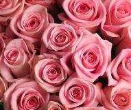 Healing Rose Reiki - Heilende Rose Reiki