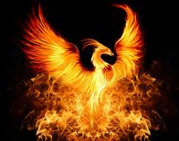 Fire of the Phoenix Reiki - Feuer des Phoenix Reiki
