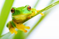 Wonders of the Tree Frog - Wunder des Laubfroschs