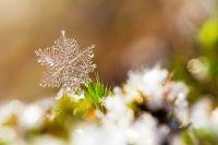 Snow Spirits Empowerment - Schnee Spirits Ermächtigung