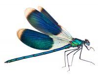 Blaue Libellenenergie