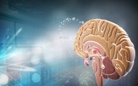 Hypothalamus-Hypophyse-Reiki